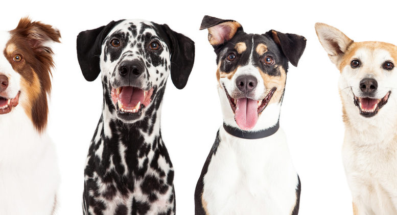 four types of dog breed that may bite a person.